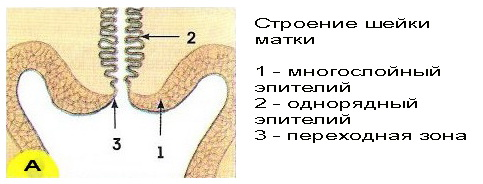 seks-s-eroziey-sheyki-matki